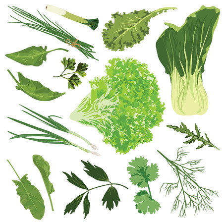 Essbare Grüns. Spinat, Salat, Petersilie, Dill, Rucola, Zwiebel, Lauch, Sauerampfer auf weißem Hintergrund