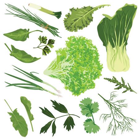 Légumes comestibles. Épinards, salade, persil, aneth, roquette, oignon, poireau, oseille sur fond blanc