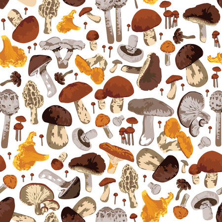 Seamless pattern with mushrooms. A lot of different edible mushrooms on a white background.