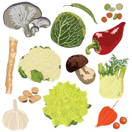 Set Gemüse auf weißem Hintergrund