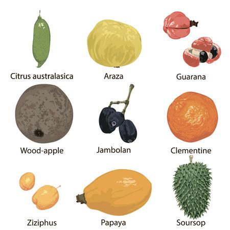 Set of different fruits on a white background. Ilustração