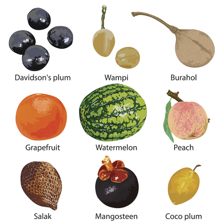 Set of different fruits on a white background. Stock Illustratie