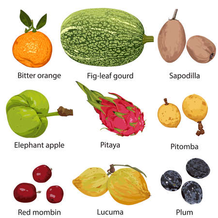 Different fruits with names on white background