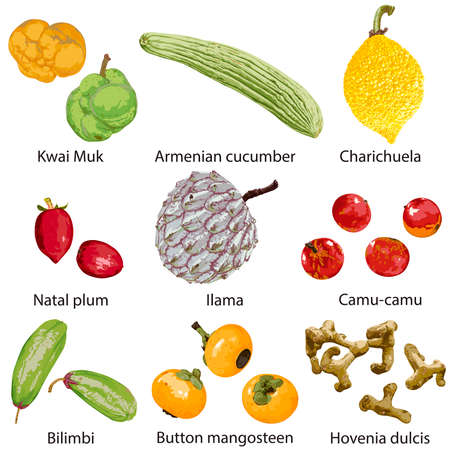 Set of fruits on a white background with the name 向量圖像