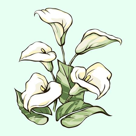 calas blancas: Ramo de calas blancas