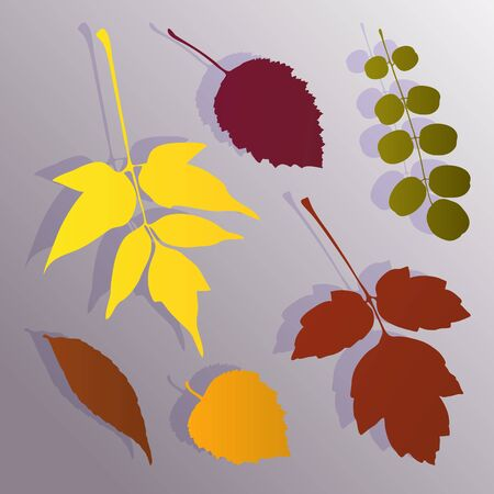 Silhouette of autumn leaves of different trees on a gradient background.  Stock vector illustration for design.