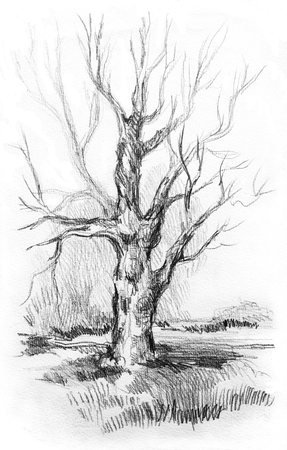 dry grass: Dry tree without leaves with sketch grass. Graphite pencil drawing from nature on white background.
