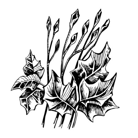 Vector sketch bouquet of leaves and young shoots of buds. Use for flyer, poster, clothing prints. Illustration
