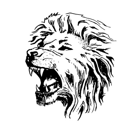 Sketch vector lion head. Open mouth grin isolated on white background. Illustration