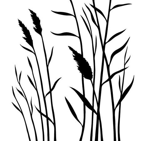 Silhouet van het riet dat op witte achtergrond wordt geïsoleerd