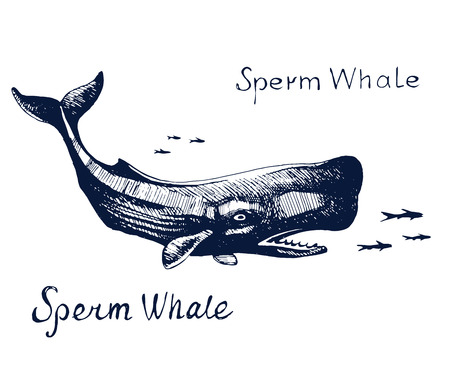 A Sperm whale, the animal on the hunt for fish