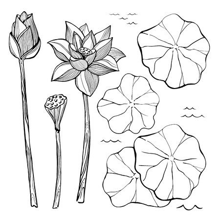 Vector sketch set of flowers and leaves of the lotus