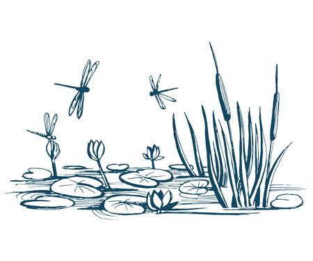 Nenúfar y cañas en el estanque