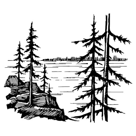 conifer: Landscape with lake and spruce fores