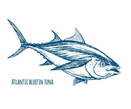Atlantic bluefin tuna 向量圖像