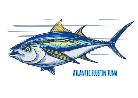 Atlantic  tuna. 向量圖像