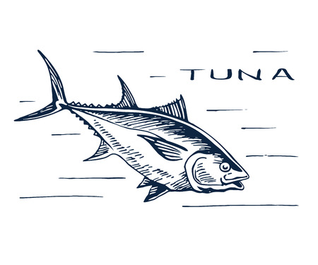 bluefin tuna: Atlantic bluefin tuna for sushi