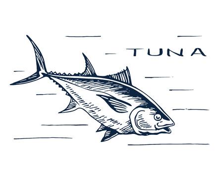 Atlantic bluefin tuna for sushi