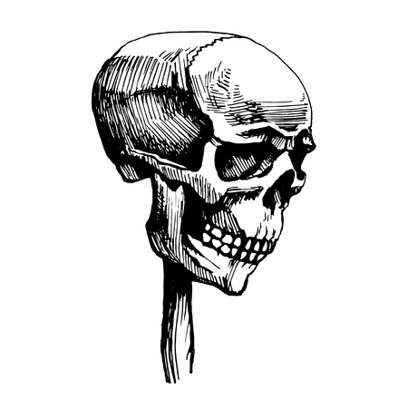 Skull is wearing a wooden stake