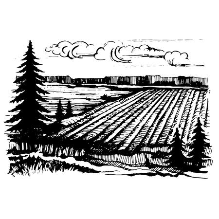 Agricultural crops sketch