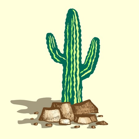 Lonely cactus on stones with shadow, vector cactus in sandy desert, color illustration.