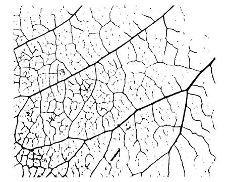 Isolierte natürliche Textur des Pflanzenblattes. Die Blätter des Baumes sind schwarz. Vektor-Illustration.