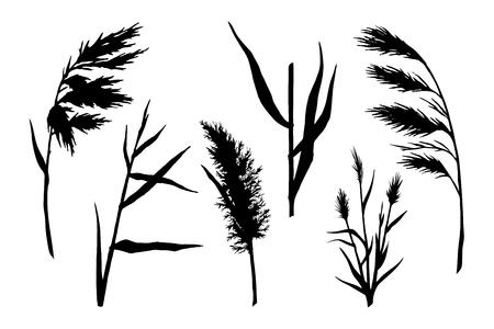 reed silhouette set Çizim