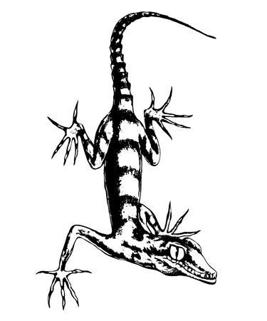 Lizard  hand-drawn vector