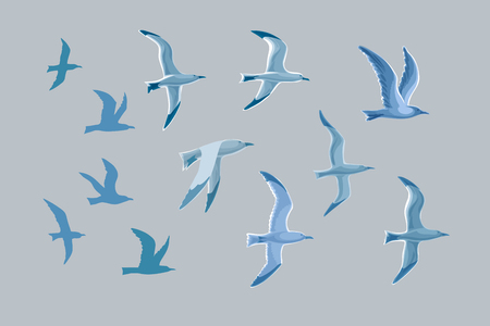 Vector set of seagulls in flat stylized style isolated on gray background. Seagull, seabird.