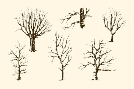 Trunks of trees vector set Çizim