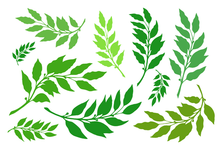 Laurel branches are a set of different versions of shapes and colors. Vector illustration