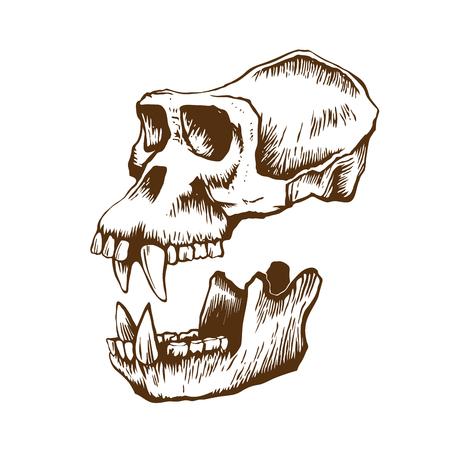Garrile monkey skull