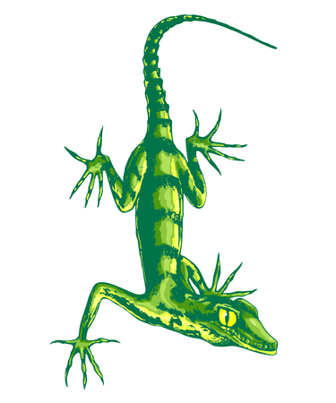 Lizard with long claws, color vector illustration. Çizim