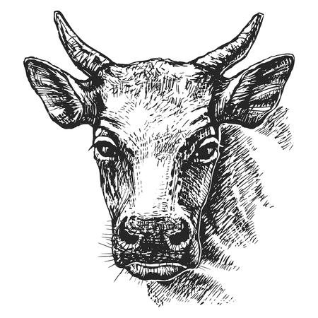 Cow head sketch Çizim