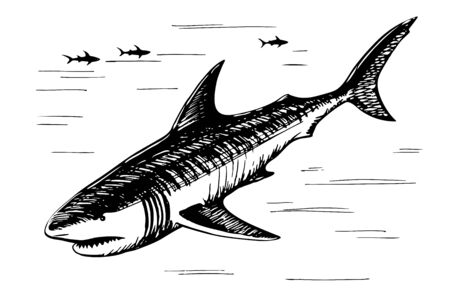 Shark sketch freehand drawing 일러스트