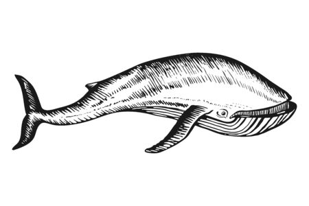 Whale Doodle hand drawn sketch