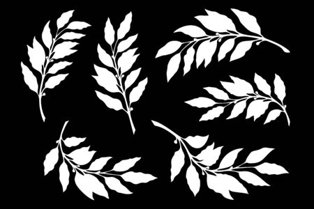 Silhouettes of branches with laurel leaves