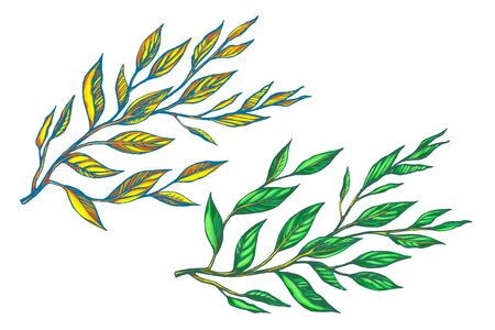 Two branches with leaves vector illustration. 일러스트