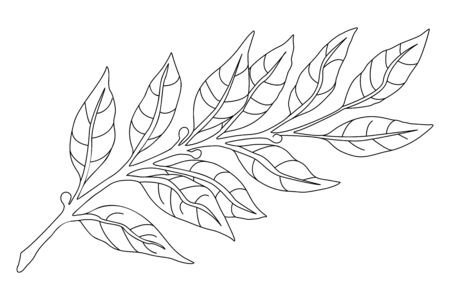 Branch Line sketch. Botanical illustration, a branch of a plant with leaves. Hand drawn liner.