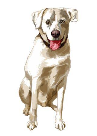 Yellow dog breed Labrador Retriever sits