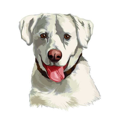 The head of a white Labrador Retriever dog. Vector illustration of an animal on a transparent background.