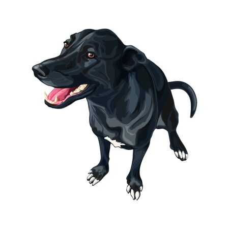 Dog created by crossing Labrador Retriever and Border Collie hand-drawn vector