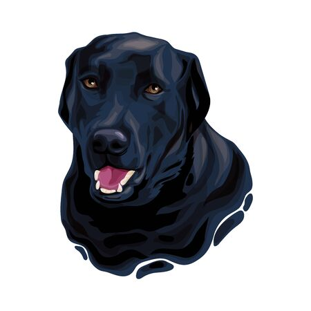 Black Labrador Retriever dog head Vettoriali