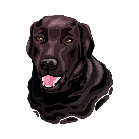 Brown Labrador Retriever dog head