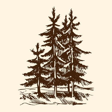 Vector sketch silhouette of a Canadian pine tree. The conifer tree isolated on a beige background