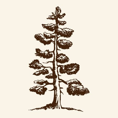 Hand-drawn vector sketch of a pine tree. The conifer tree isolated on a beige background