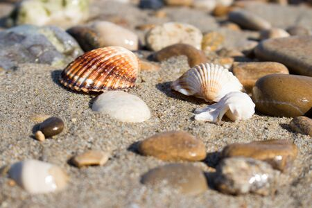 the remains of the shells on the shoreline in a late summer morning