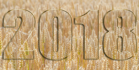 2018 against the background of a wheat field Reklamní fotografie