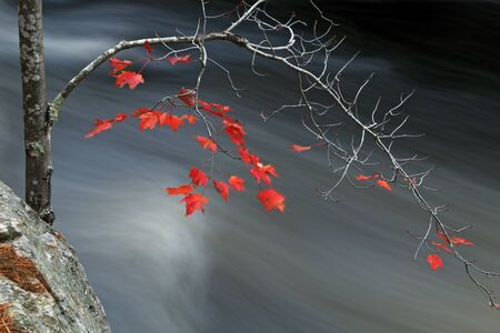 Autumn in Canada. Red leaves above a stream of water.