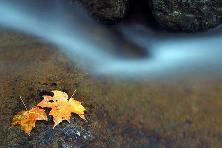 現在の水。水の流れの近くに石の上に黄色の葉。